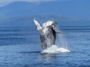 Baleine Latitude zéro