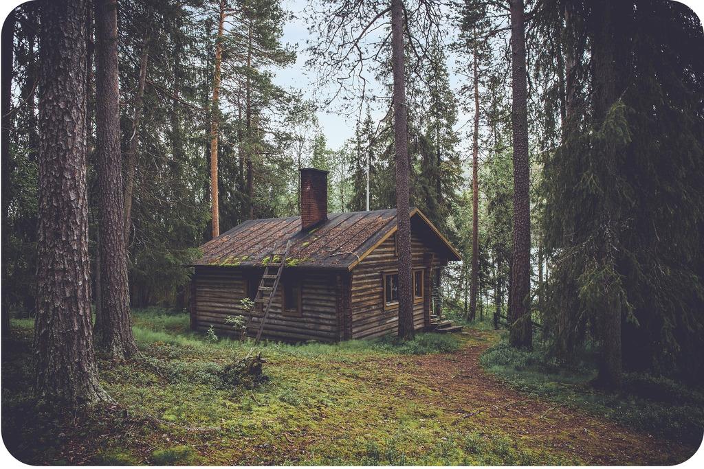 Le Grand Frère cabane dans les bois